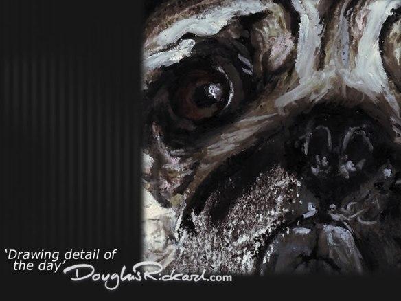 In a Pug's Eye