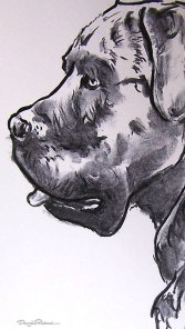 Cane Corso drawing