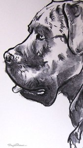 Cane Corso drawing