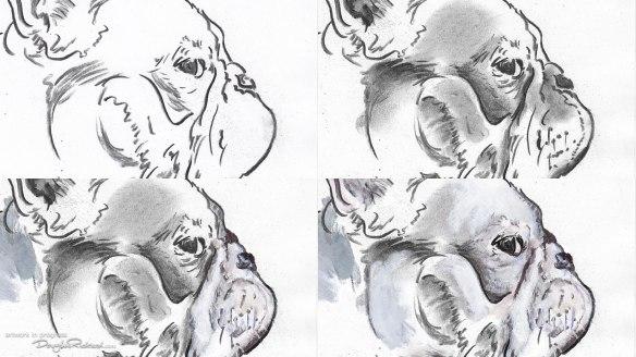 French Bulldog drawing in progress