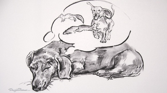 """Sleeping Dog - The Dachshund"" by Douglas Rickard"