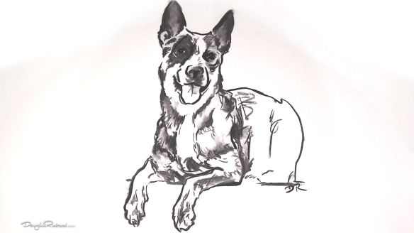 Blue Heeler Art by Douglas Rickard