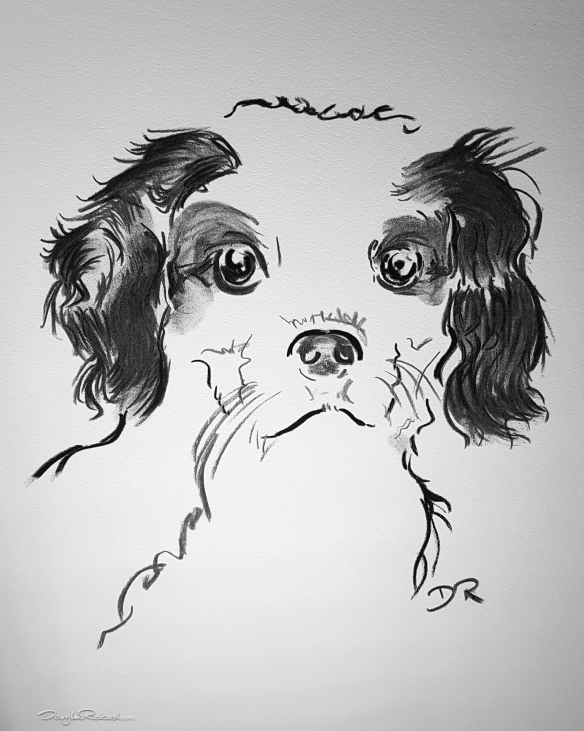 Charcoal - Cavalier King Charles Spaniel Puppy by Douglas Rickard