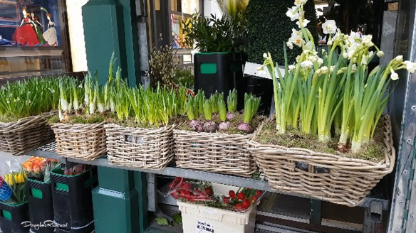 Spring flower bulbs on New Bond Street